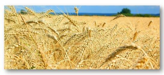 Аллергия на пшеницу у грудничка